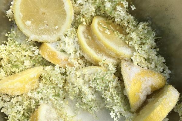 Elderflowers and lemons covered in sugar