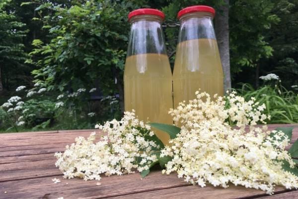 Elderflower cordial in bottles with elderflowers in front