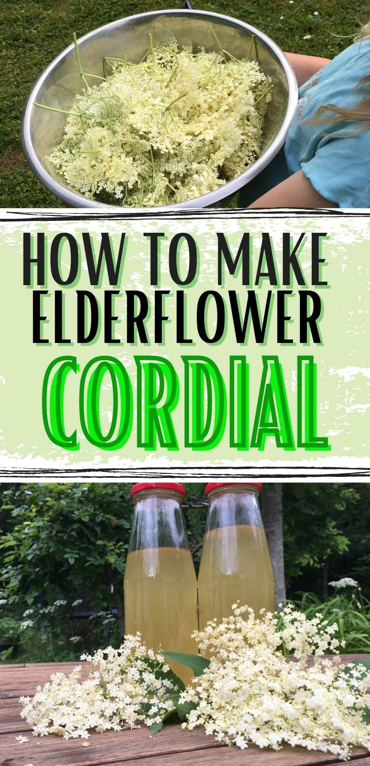 elderflower cordial in bottles and elderflowers in a stainless steel container